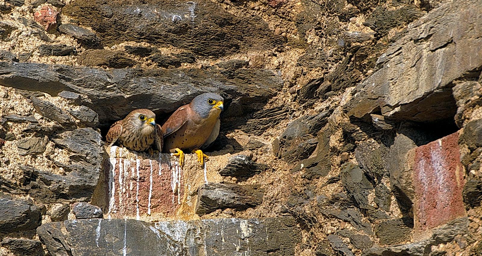 urban-birding-turismo