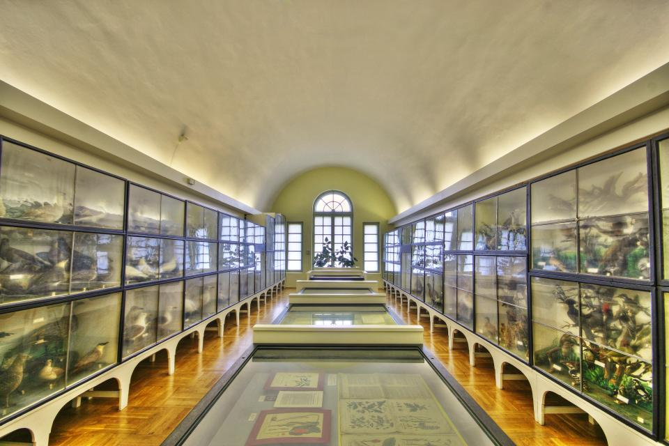 Friedrich Naumann - museo